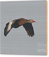 Black-bellied Whistling Duck Wood Print