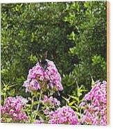 Black Butterfly Wood Print