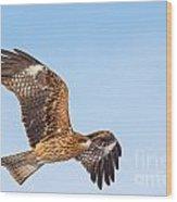 Black Kite In Flight Wood Print