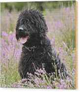 Black Labradoodle Wood Print