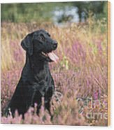 Black Labrador Dog Wood Print