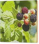 Black Raspberries 2 Wood Print