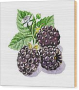 Artz Vitamins Series The Blackberries Wood Print