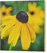 Blackeyed Susan Wood Print
