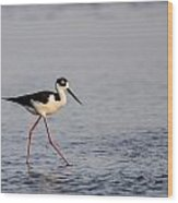 Blacknecked Stilt Wood Print