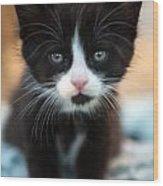Black And White Kitten Wood Print