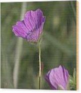 Bloody Geranium Wood Print
