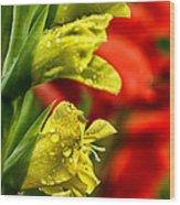 Blossom With Raindrops Wood Print