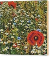 Blossoming Meadow Wood Print