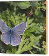 Blue Beauty Wood Print