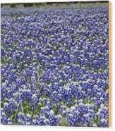 Blue Bonnet Carpet V7 Wood Print