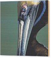 Blue-eyed Pelican Wood Print