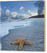 Blue Foam Starfish Wood Print