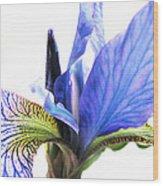 Blue Iris 1 Wood Print