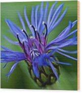 Blue Wood Print by Jerri Moon Cantone