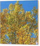 Blue Skies And Golden Aspen Trees Wood Print