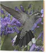 Blue-throated Hummingbird Wood Print