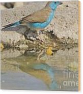 Blue Waxbill Reflection Wood Print