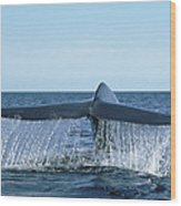 Blue Whale Tail Sea Of Cortez Wood Print