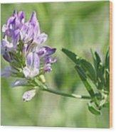 Blue Wild Flower Wood Print
