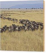 Blue Wildebeest Migrating Masai Mara Wood Print