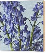 Bluebells 2 Wood Print