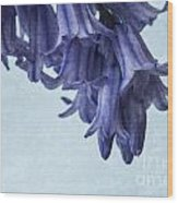 Bluebells 3 Wood Print