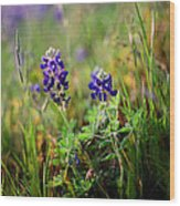 Bluebonnets On Film Wood Print
