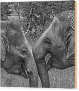 Blushing Elephants Wood Print