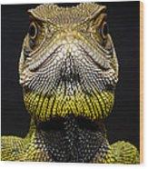 Bocourts Dwarf Iguana Choco Rainforest Wood Print