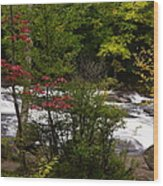 Bog River Wood Print