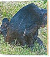 Bonobo Mother And Baby Wood Print
