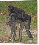 Bonobos Wood Print