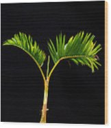 Bonsai Palm Tree Wood Print
