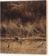 Bosque Del Apache New Mexico-sand Cranes V2 Wood Print