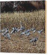 Bosque Del Apache New Mexico-sand Cranes V3 Wood Print