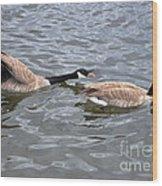 Bossy Canada Goose Wood Print