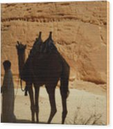 Bou Bou Camel With Beduin Owner  Wood Print