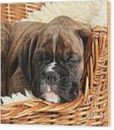 Boxer Puppy Wood Print