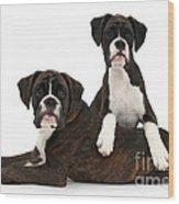 Boxer Pups Wood Print by Mark Taylor