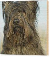 Briard Dog Wood Print