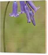 British Bluebell Hyacinthoides Non Scripta Wood Print