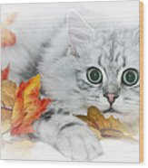 British Longhair Cat Wood Print by Melanie Viola