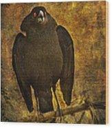Bronzed Cowbird Wood Print