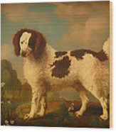 Brown And White Norfolk Or Water Spaniel Wood Print