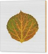 Brown Green Orange And Yellow Aspen Leaf 1 Wood Print