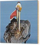 Brown Pelican Preening Wood Print