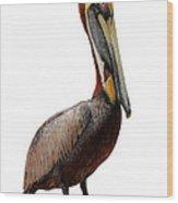 Brown Pelican-7 Wood Print