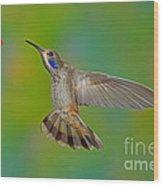 Brown Violet-ear Hummingbird Wood Print