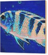Bubbles Fish Art By Sharon Cummings Wood Print by William Patrick